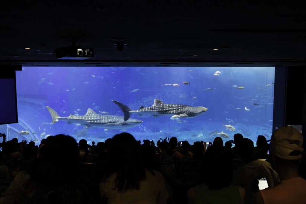 【海洋博公園の一部!】美ら海水族館・備瀬のフクギ並木の回り方と必需品まとめ!